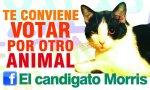 001_candigato_morris