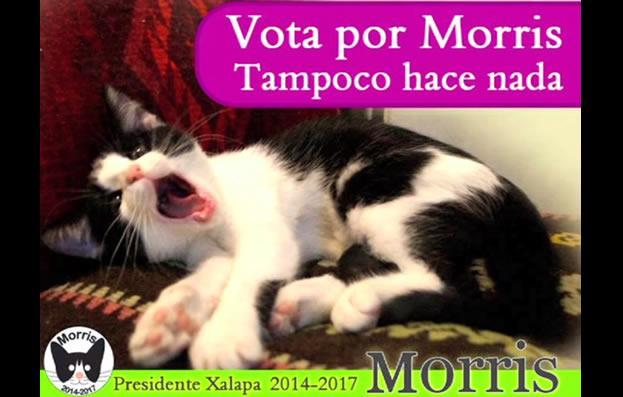gato-morris-xalapa